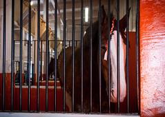 Clydesdale (allie.hendricks.photography) Tags: animals thebige horse nikond40x season 2017 camera massachussetts year month unitedstates fall september world