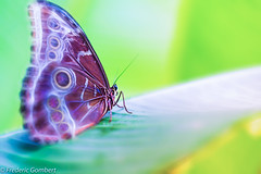 the path (frederic.gombert) Tags: flower butterfly color green light sun leaf plant macro colors insect sony