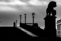 Downhill blues (andersåkerblom) Tags: stockholm streetphotography streetphoto street bw bnw monochrome blackandwhite statue lion