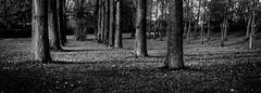 (Nico_1962) Tags: zwolle zwartwit bw blackandwhite leica leicam 50mm heliar voigtländer rangefinder meetzoeker manualfocus nederland boom bomen gras thenetherlands
