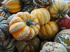 Kürbis (ConnY_P) Tags: kürbis herbstmarkt autumn wiesbaden hessen orange farben bunt