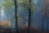 Blue Hour  at ISO 12800 ... 😱 (sedregh (off for some days)) Tags: nebel fog mist wald eifel woods forest highiso landscape landschaft bluehour