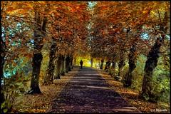 Burton Upon Trent-082 (John@photosuite) Tags: rivertrent burtonontrent autumn bankside staffordshire uk nikon breweries abbey fallenleaves fall foliage sky water landscape path riverside