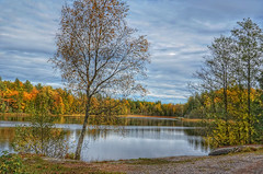 Colorful , quiet place. (Bessula) Tags: bessula nature autumn fall tree forest color lake skay season sweden scenery view landscape boat
