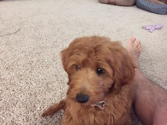 Ruby Red's Ruby in her new home!
