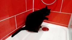 Vidéo - Baghee a 15 ans et prend une douche matin et soir :-) (Loanne Lo ou Lolo) Tags: humour