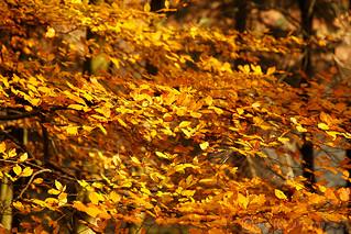 Gold Leaf!