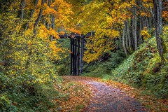 A Special Spot (Paul Rioux) Tags: nature outdoors fall autumn seasonal season colours leaves foliage gallopinggoosetrail bridge colwood bc orange yellow prioux trail path solitude quiet scenic peaceful tranquility explored