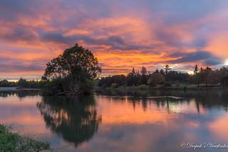 Sunrise at Vasona Lake