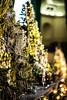 asbury 3 (jfl1066) Tags: asburypark asbury christmastree holidaydecorations christmasdecorations bazaar