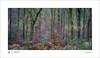 Multi colour autumn (tobchasinglight) Tags: autumn2017 beechtrees buckinghamshire burnhambeeches cityoflondon corporationoflondon englishwoodland landscape marlborough oaktrees savernake savernakeforest uk wiltshire woodland ©paulmitchell