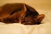 Lizzie (DizzieMizzieLizzie) Tags: abyssinian aby beautiful wonderful lizzie dizziemizzielizzie portrait cat chats feline gato gatto katt katze katzen kot meow pisica sony animal pet 2017 cute bed siesta yellow neko macska kedi 猫 kočka kissa γάτα köttur kucing kaķis katė кошка mačka gatos kitteh chat ネコ beauty a6500 zeiss fe 55mm f18 za ilce6500 ilce sel55f18z sonnar awesome digital golden style
