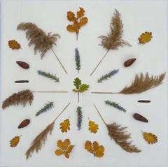 Autumn art energy life (Scagliediterra) Tags: nature natura leaf leaves fogliesecche foglie autumn autunno colors colori composizione composition stilllife naturamorta creazione creativity