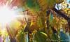125. AUTUMN: Sunkissed From Heaven (Meili-PP Hua 2) Tags: macro closeup flowermacro macroflowers flowercloseups flowercloseup flower garden grass tree trees bright sunny sunset fineday glow rays backlit backlighting shadows silhouettes sundance sunnyrays fine hot summery summer water skydrama blazing blaze blue vivid haze landscape bush sky green leaf leaves branches flora mlpphflora mlpphlandscape mlpphsundance mlpphnature nature flowers blooms bloom