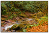 Beginnings.... (tippjim) Tags: autumn fall leaves stream tippjim nikon2470 river b c d e f g h ireland j k landscape m n o p