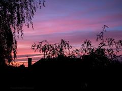 Panasonic gx80 (Jasrmcf) Tags: panasonic panasonicgx80 panasonic1232mm lumix leica skyporn nighysky sky silhouette pink beautiful nature garden greatphotographers colourartaward colours colourful detail bokeh bokehlicious dof depthoffield ngc