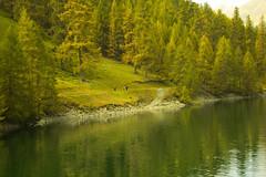 lago livigno (http://francescabordonaro.it/) Tags: livigno lake nature ngc green alberi autunno