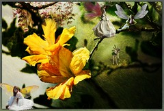 Gathering (PaulO Classic. ©) Tags: photoshop canon eos450d capetown deviantart hibiscus