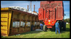 10/20/17 - Picking & Bailing Cotton (CubMelodic23) Tags: october 2017 vacation trip alabama family cotton field fields farm tractor equipment bail bailing picking hdr