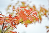 Autumn colors 🍁 #Finland (L.Lahtinen (nature photography)) Tags: autumn finland leaf leaves foliage fallcolors 7dwf europe nature naturephotography autumnleaves autumncolors bokeh beauty forest wood park flora ruska luonto suomi metsä syksy nikond3200 nikkor55300mm lehdet dof depthoffield kasvit tree highkey nikkor colour