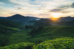 Sunrise at Cameron Highland (Louis Quah) Tags: sunrise malaysia cameron highland pahang asia landscape tea bohtea