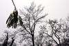 silhouette. (marfis75) Tags: marfis75 fall creativecommons herbst cc autumn croatia kroatien zagreb november 2017 bäume schatten silhouette herbstlich wetter baum tree trees umriss shade