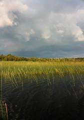 IMG_4614-1 (Andre56154) Tags: schweden sweden sverige see lake wasser water ufer himmel sky wolke cloud schilf reet landschaft landscape