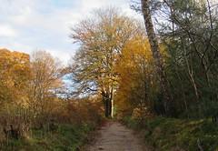 Maarn, Utrecht (Elisa1880) Tags: maarn utrecht nederland netherlands autumn herfst trees bomen doorn