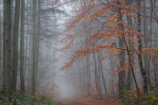 Farbtupfer im Herbstwald