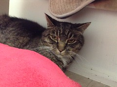 Ozzy - 12 year old neutered male