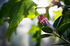 Pretty Light (Silaris Inc.) Tags: nahaufnahme bokeh pflanze blühen blüte freigestellt dof licht depthoffield natur gegenlicht bochum nordrheinwestfalen deutschland de