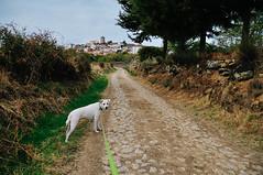 Penela da Beira (Viseu, Portugal) (Gail at Large | Image Legacy) Tags: 2017 icethedog peneladabeira portugal gailatlargecom