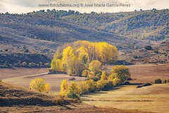 Sombra del verano (fotochemaorg) Tags: agricultura airelibre árbol bosque campo cielo colina escenarural mazarete montaña naturaleza otoño paisaje prado tierra