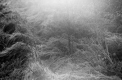 First frosts (Other dreams) Tags: blackandwhite landscape grass silence coldness frost morning sunrise halo sun magic helios81h fp4 ilford film analogue traditional selfdeveloped latefall 2017 november pomerania poland backlight nature existinglight plane grassland
