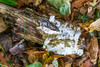 Forest Floor (JMS2) Tags: nature log rotting leaves autumn fallen earth wood treetrunk branch