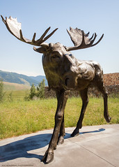 The Moose Flats Sculpture at the National Museum of Wildlife Art (Jeff_B.) Tags: wyoming yellowstone jackson jacksonhole grandteton nationalpark america usa nationalmuseumofwildlifeart wildlife art sculpture sculpturewalk museum sandyscott moose