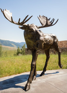 The Moose Flats Sculpture at the National Museum of Wildlife Art