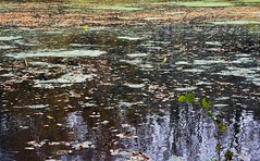 Am Teich im Wald; Bergenhusen, Stapelholm (13) (Chironius) Tags: stapelholm bergenhusen schleswigholstein deutschland germany allemagne alemania germania германия niemcy teich pond herbst herfst autumn autunno efteråret otoño höst jesień осень spiegelung refleksion reflection réflexion riflessione отражение reflexión yansıma wasserspiegel wasser wald forest forêt лес bosque skov las