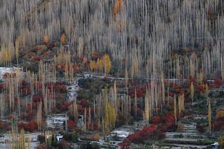 Autumn de Hunza