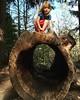 Willoughby, Ohio (Jeff Futo) Tags: holden treeclimbing fun children climb kid tree
