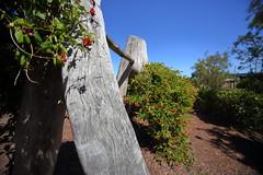 Cranbourne RBG Nov 2017 112 (Graeme Butler) Tags: water landscape history gardens australianplants architecture victoria australia