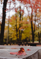 """Red Leaves • <a style=""""font-size:0.8em;"""" href=""""http://www.flickr.com/photos/129579084@N06/38297813291/"""" target=""""_blank"""">View on Flickr</a>"""