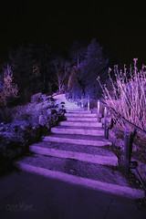 Cool Winter Walk (wilbias) Tags: park footpath landscape scenic purple vertical blue cool winter night lights display holiday stairs rbg rock royal botanical gardens aldershot burlington ontario canada
