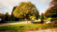 The tree - 4081 (YᗩSᗰIᘉᗴ HᗴᘉS +13 000 000 thx) Tags: tree arbre mist fog cimetière cemetery belgium belgique europa europe hensyasmine yasminehens