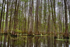 Verticles (Nola Nate) Tags: reflections chicotstatepark ibeauty swamp water trees tupelo cypress nature landscape louisiana