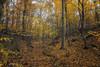 Si l'automne m'était conté (Claudio Nichele (@jihan65 on Twitter)) Tags: automne autumn autunno bois woods boschi forêt forest foresta feuillesmortes fogliemorte deadleaves feuillage foliage