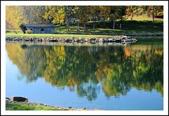 "A ""Modern"" Covered Bridge and Reflected Autumn (sjb4photos) Tags: michigan brooklynmichigan autumn pond coveredbridge"
