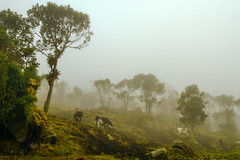 Colombia (szeke) Tags: colombia choachi fog mountains countryside