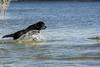 Spel en vreugd op het hondenstrand (Jan-Willem Adams) Tags: adamsphotography dog erkemederstrand fordjw gelderland herfst honden labrador nederland netherlands nikki zeewolde flevoland nl