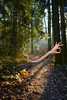 Everything Is OK (swong95765) Tags: forest path trees trail hand arm ok